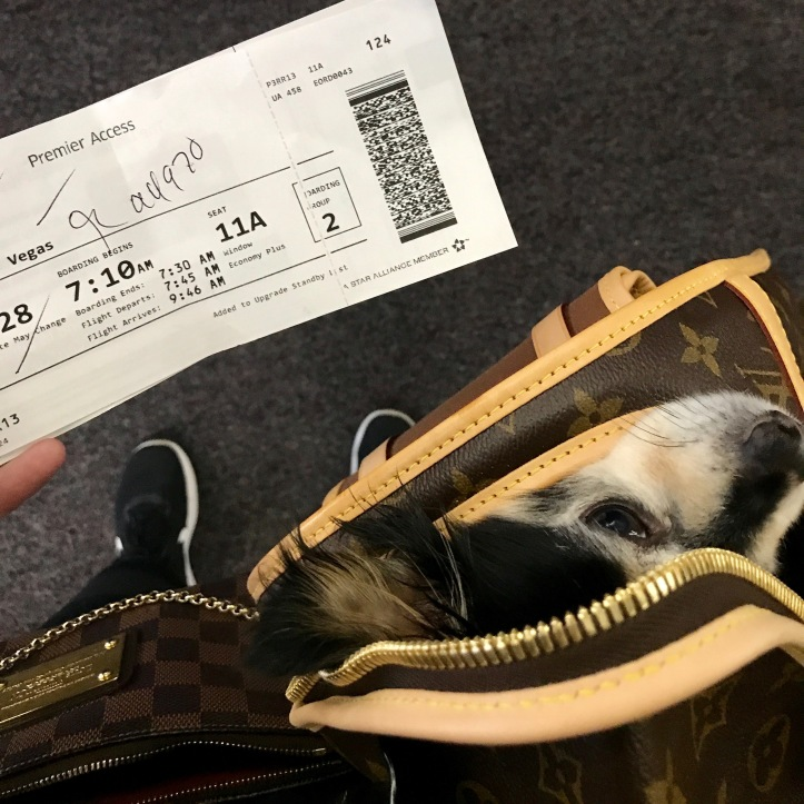 Louis Vuitton Dog Bag United Airlines